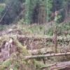 Come gestire le foreste schiantate al suolo