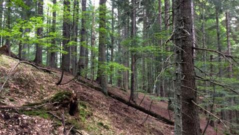 Progetto CaSCo e certificato Low Carbon Timber