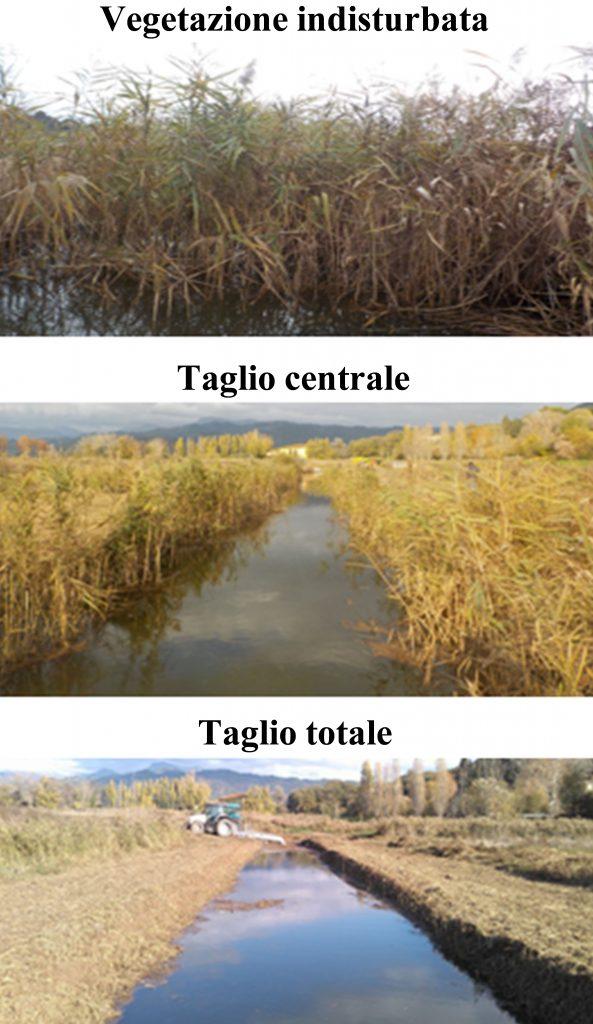 Un confronto tra 3 tipologie di taglio della vegetazione riparia: indisturbata, con taglio centrale e con taglio totale